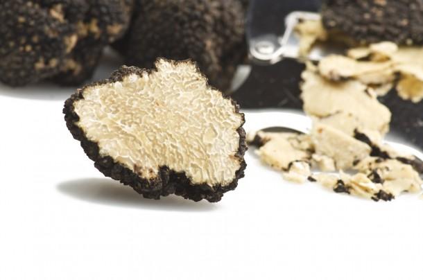 périgord truffle