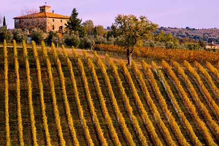 "Alt=""Vorrei italian organic wine tuscan vineyard"""