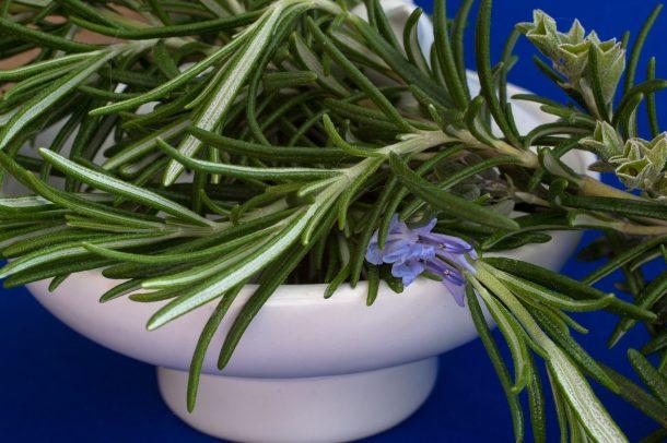 Italian Rosemary