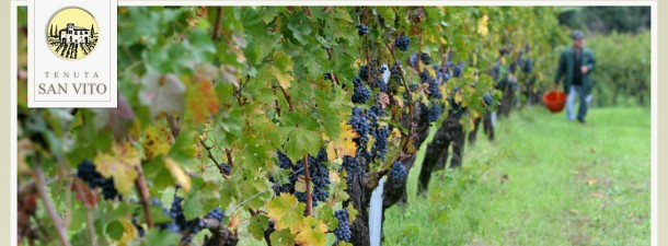 "Alt=""Vorrei italian tenuta san vito natural wines"""