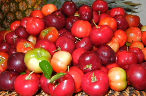 "Alt=""vorrei italian superfoods acerola cherry"""