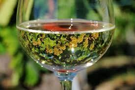 """Alt=""""vorrei italian natural wines"""""""