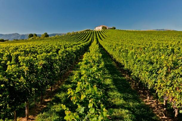 "Alt=""vorrei italian prosecco sparkling wine"""