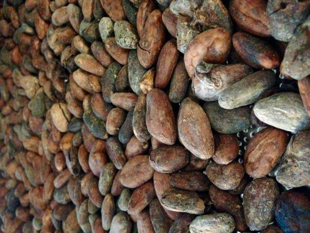 modica chocolate beans