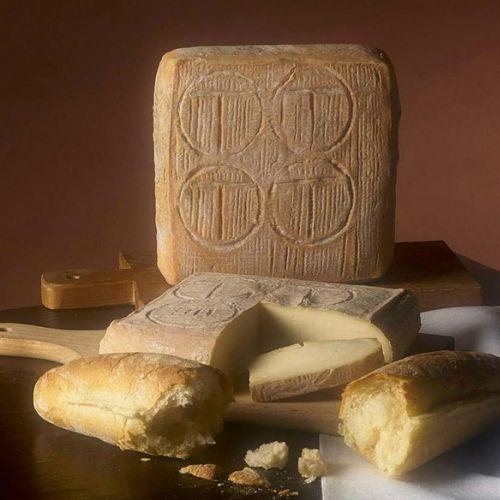 Italian Taleggio cheese
