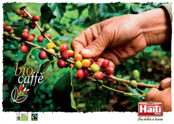 Organic fair trade coffee beans